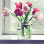 Una flor preciosa para decorar, los tulipanes