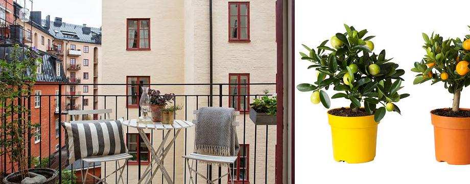 Decoración para mini terrazas