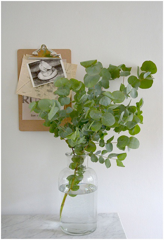 eucalyptus-decor-06