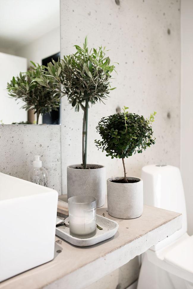 plantas-en-el-baño-09