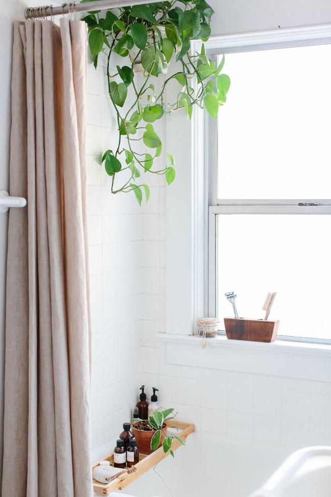 plantas-en-el-baño-13