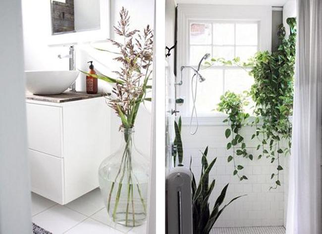 plantas-en-el-baño-15