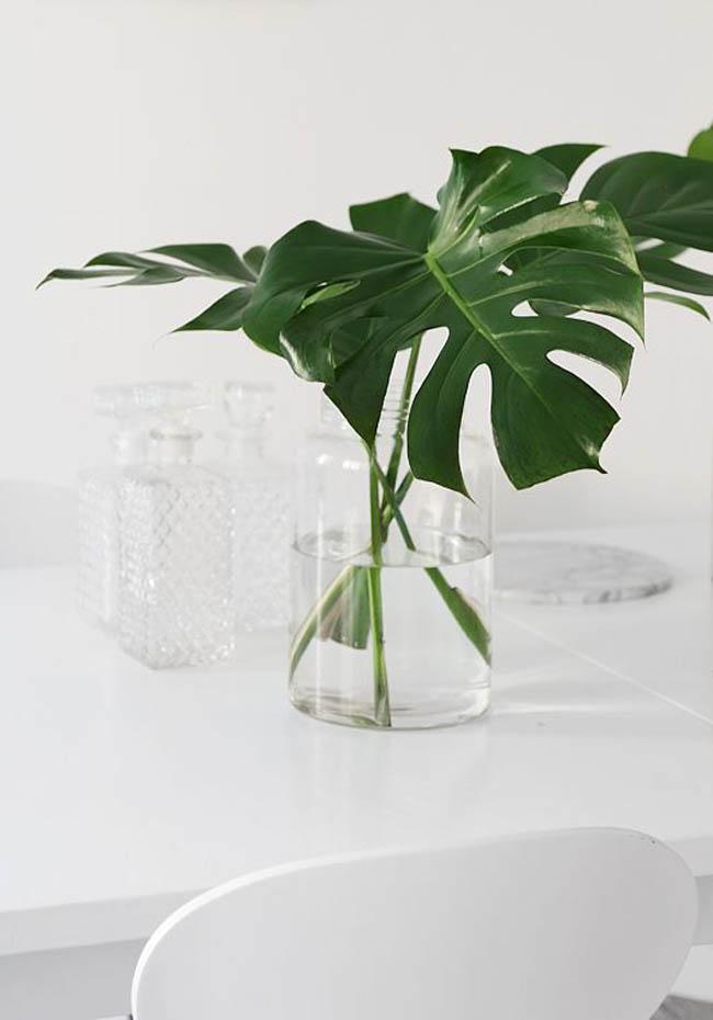 planta-costilla-de-adan-03