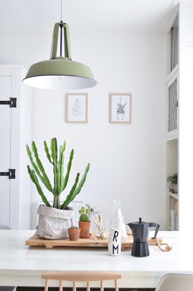 cactus-01