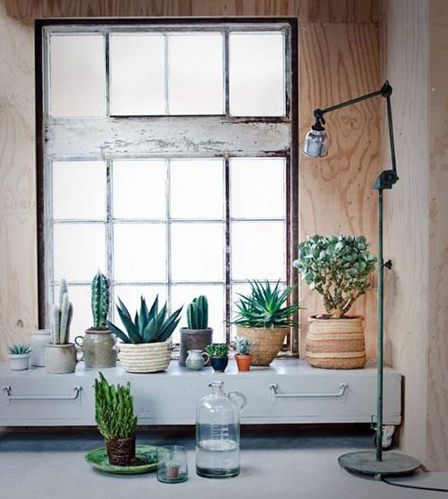 25 ideas de decoraci n con cactus y suculentas plantas for Decoracion con plantas crasas