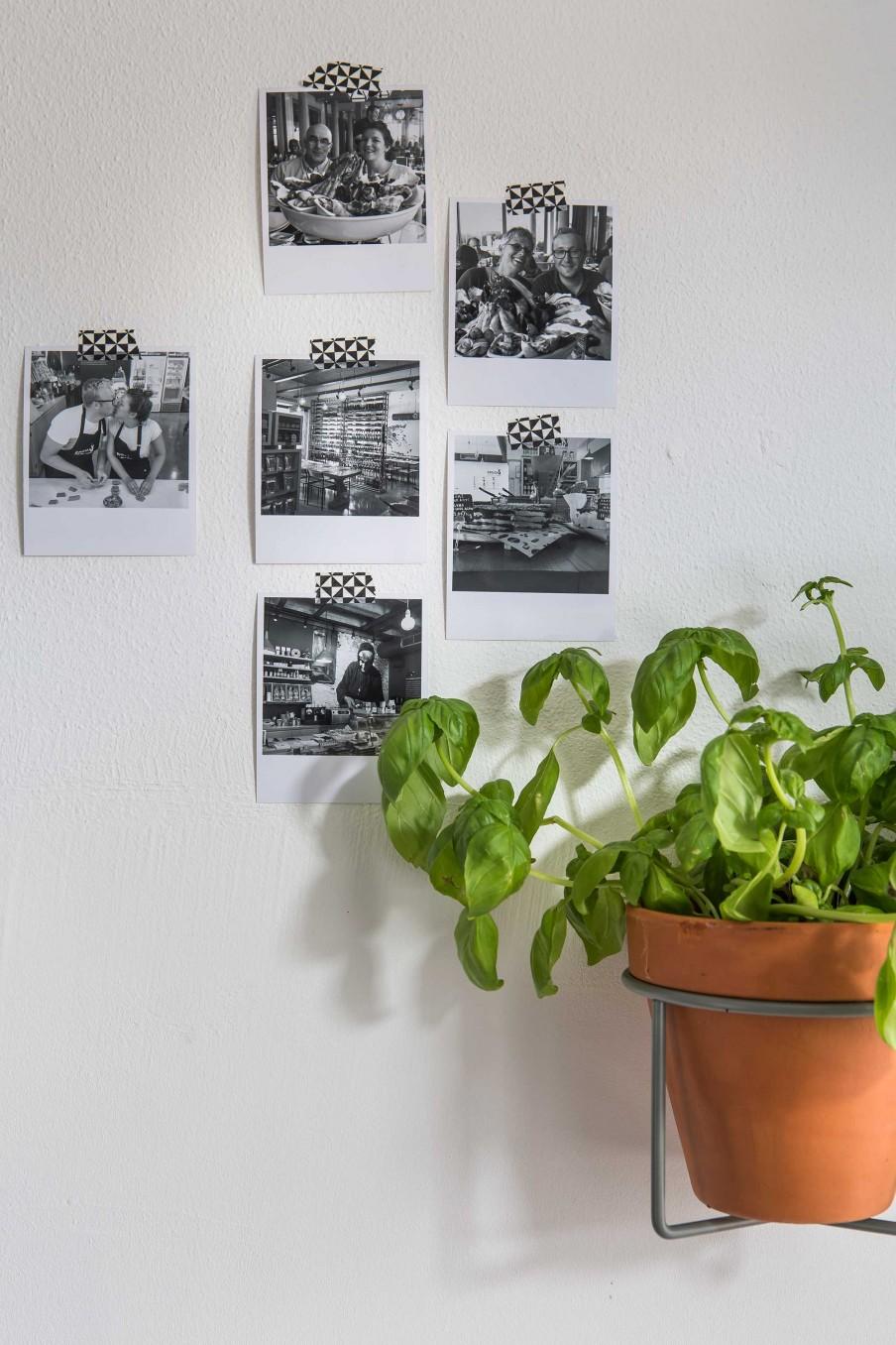 casa-verde-natural-03