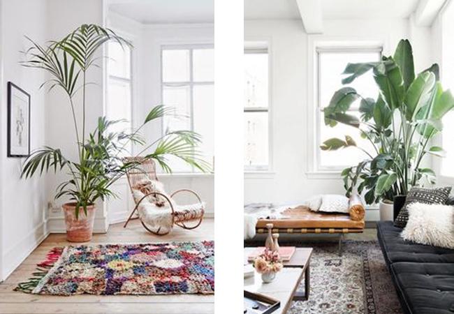 Decorar con plantas xxl estilo escandinavo for Tipos de plantas para decorar interiores